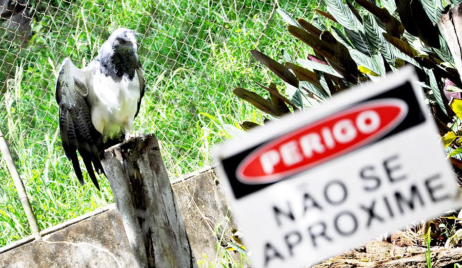 soteropoli.com fotografia fotos de salvador bahia brasil brazil 2010 zoo zoologico by tuniso (15)