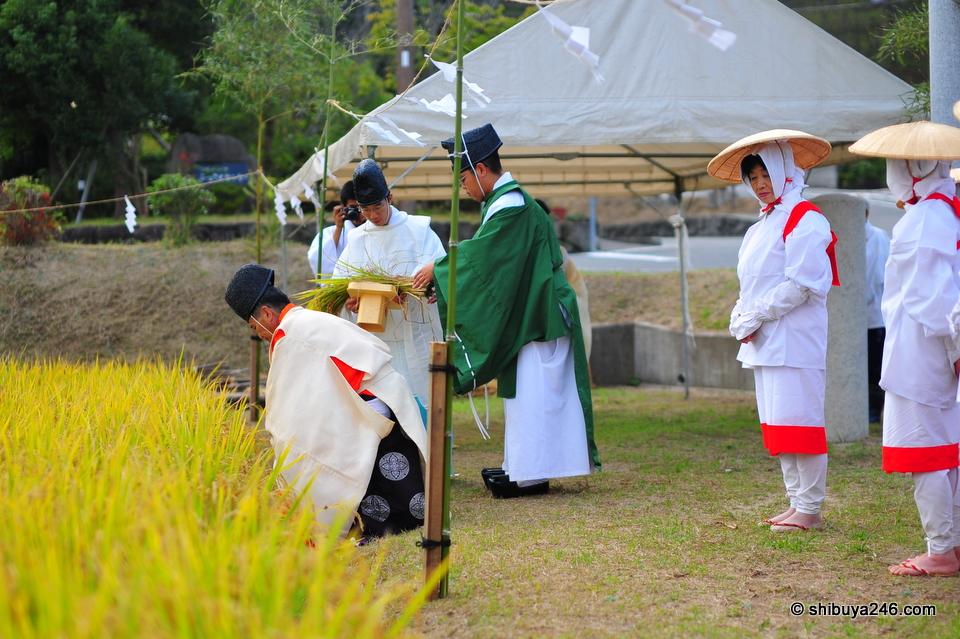 Rice Harvest, Izanagi Jinja