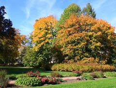 (:Linda:) Tags: park autumn cloud tree germany town herbst wolke thuringia autumnal cloudysky wolkig hildburghausen herbstlich bewlkterhimmel