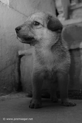 Abandoned pup