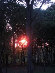 (itfer) Tags: wood trees sunset camp sun sol beautiful forest pretty do farm sony bonito mysterious campo floresta florest por mystic h20 fazenda misterioso degrade mstico vores weheartit