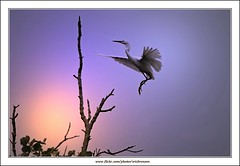 Sunset view with Little Egret (Ericbronson's Photography) Tags: sunset bird nature canon interesting singapore little wildlife egret pasir ris aplusphoto ericbronson mygearandmepremium mygearandmebronze