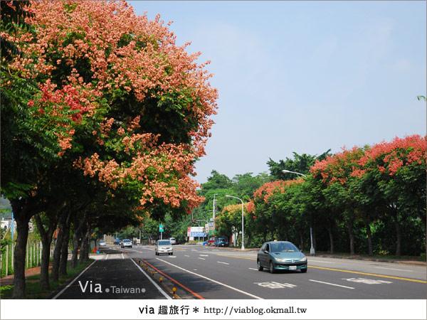【台中】台灣秋天最美的街道!台中大坑發現美麗的台灣欒樹15
