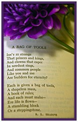 Having a pleasant journey so far? (cvanstane) Tags: flower poetry poem purple tools pointofview choices 100picturespurple