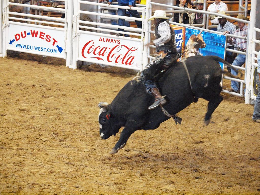 Pasadena Texas Day 2 PBR Bullriding Pasadena Livestock Show and Rodeo October 9 2010 Bull Riding Bulls Cowboys Bullfighters Bullrider Riders Cowboys Fighting Bullfighters Riding