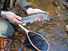 Fly fishing near Brevard (Red House Inn) Tags: flyfishing davidsonriver northmillsriver