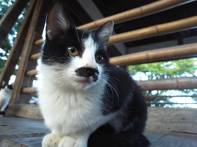 Today's Cat@2010-10-16