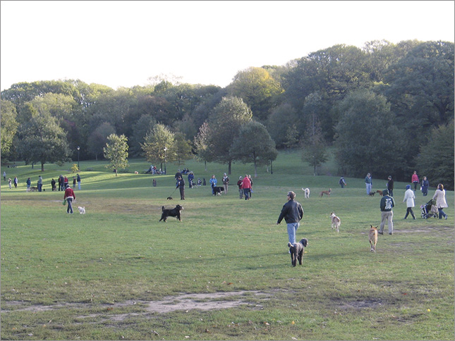 Off Leash in Prospect Park, Brooklyn