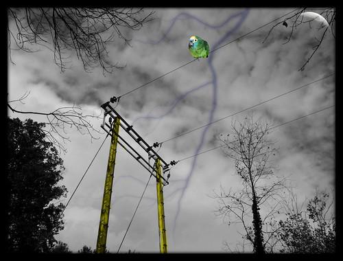 parrot on pylons