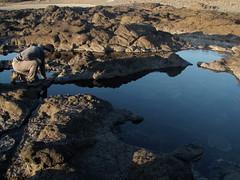 Tide Pools (dandlymambly) Tags: ocean autumn fall beach robin oregon coast october hiking tidepools tidal 2010