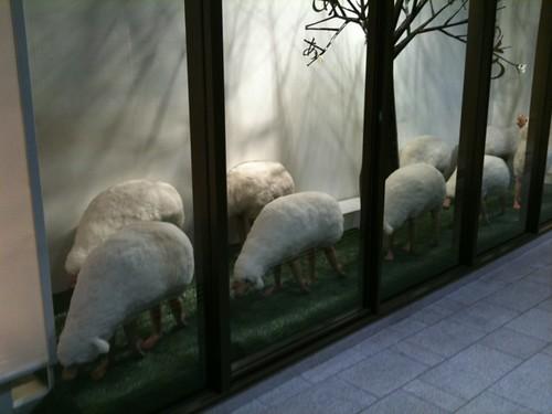 なんか違和感のある羊(集団)