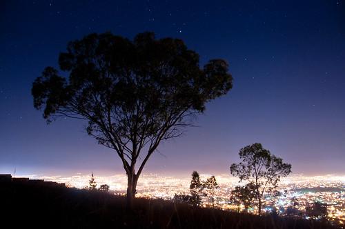 Star Tree 02