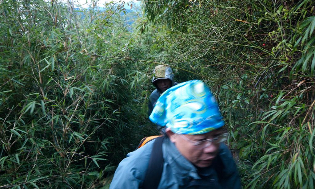 竹林中移動