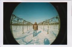 Reggio Emilia 2010 (Fubuki13) Tags: winter sky italy white snow tree alberi analog lomo lomography emilia cielo neve albero inverno azzurro bianco analogica reggio pellicola rullino