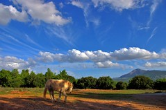 Horse (n.pantazis) Tags: autumn trees sky horse animal clouds landscape shadows hand greece disappointment scripture grazing whiteclouds pentaxkx pendeli kartpostal anawesomeshot