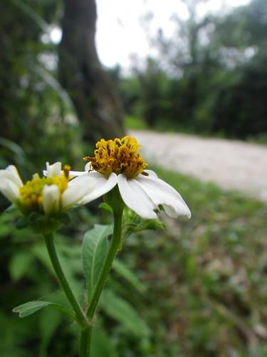 19/10/2010 Trail+Road Run