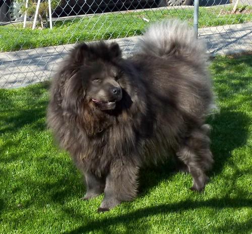Great Grey Chubby Adorable Dog - 5111591679_6346210336  Photograph_503913  .jpg