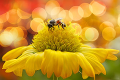 Wonderful day (-clicking-) Tags: lighting light flower macro floral beauty wonderful garden insect petals nice dof blossom bokeh ngc bee bloom flowering pistils amazingbokeh allxpressus ahqmacro superamazingbokehaward masterclasselite