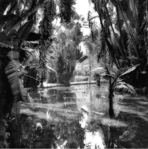 Sally Gall, Rio Botanical Garden, 1988