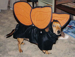 Dazs in his butterfly costume