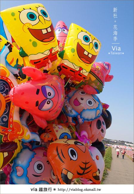 【2010新社花海】via帶大家欣賞全台最美的花海!2