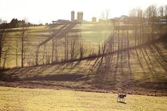 Sunny Silos (Ben DeFlorio) Tags: sun barn cow vermont farm pasture fields silos treeline vt randolphcenter canon40d