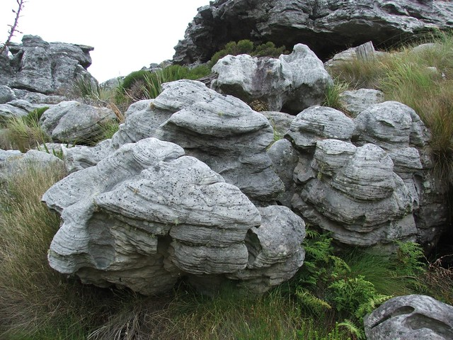 cross-bedded quartzite on Table Mountain