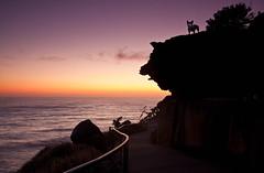 big dog, little dog (andoru) Tags: ocean sea sky art bondi dawn sydney nsw sculpturebythesea