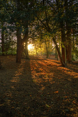 Let in the light (Jo_Krazy) Tags: park trees light red leaves sunshine berries shadows hdr marbury