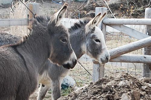wtf_donkeys
