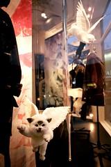 Angel Kitties (Georgie_grrl) Tags: toronto ontario cute flying wings funny downtown angels kitties pentaxk1000 queenstreetwest windowdisplay aritzia rikenon12828mm