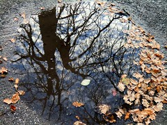 Reflections (1) (Art Of...(I need a break until ...?)) Tags: park castle nature germany ruin reflexions saxonyanhalt coth supershot coth5 blinkagain 14november2010 schlossparkharbke bestofblinkwinners