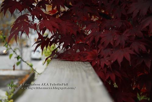 Leaves and Railings