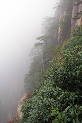 Rainforest (LeelooDallas) Tags: china autumn trees cliff mist mountain fall fog landscape asia dana gorge huangshan huang iwachow