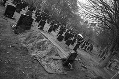 Cemetery 1 - After the diggers; before the undertakers.