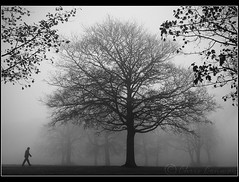 The fog.... (Digital Diary........) Tags: trees blackandwhite bw mist cold fog walker interest chrisconway sherdleypark