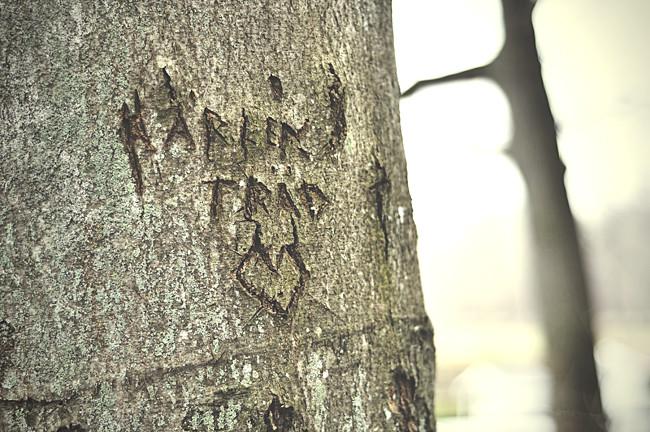 kärleksträdet