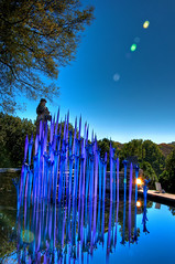 Blue and Purple Reflections (Jeff.Hamm.Photography) Tags: sculpture reflection chihuly art water glass pool garden nikon tn nashville tennessee installation fiori nikkor botanicalgarden dalechihuly hdr lightroom photomatix f3556 18105mm milliefiori cheekwoodbotanicalgarden dishippy