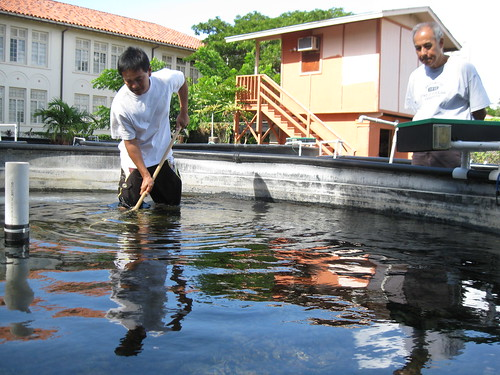 Visit to a fish farm essay