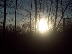 January 23, 2010 (savanna.canale) Tags: shadow sun shine