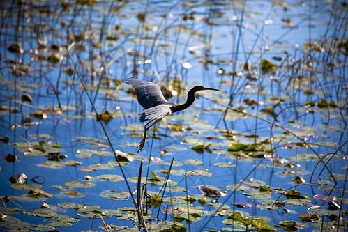 11-29-swampy-bird