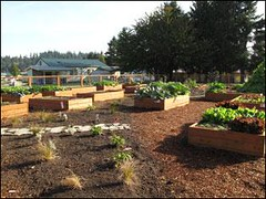 Clackamas Heights community garden (by: Housing Authority of Clackamas County)