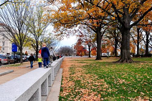 D.C. Trees