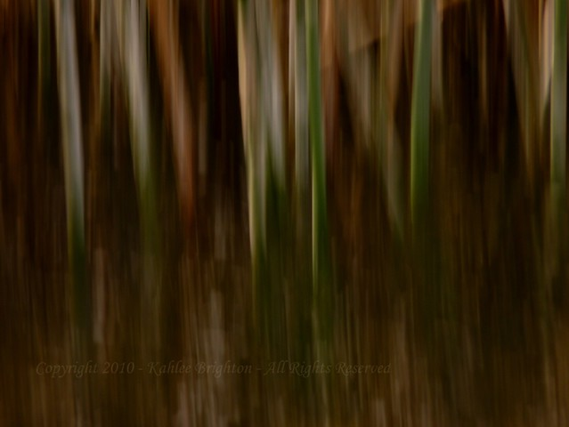 Reed Patterns 3