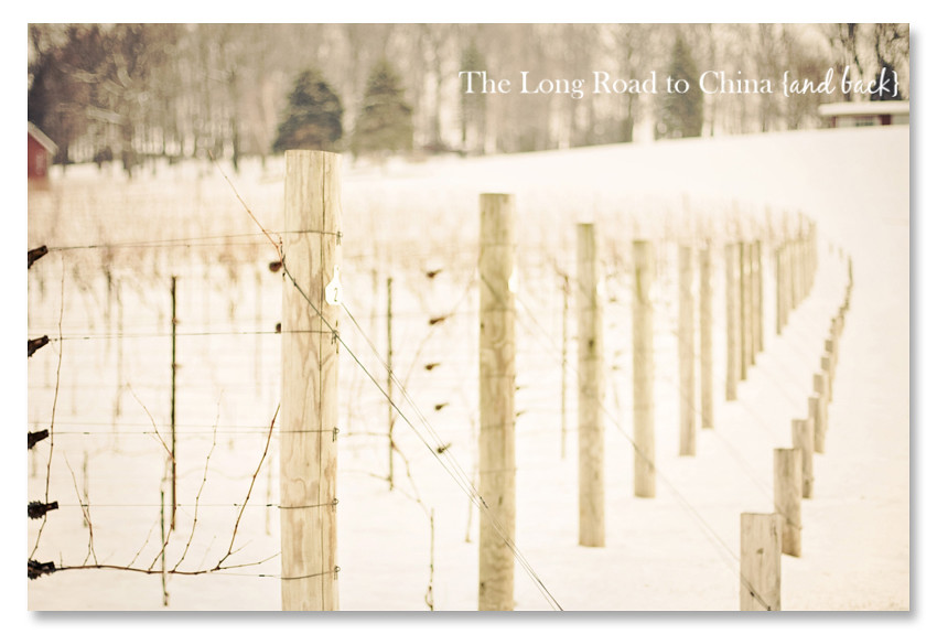 Grape Vines BLOG