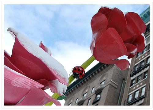 Will Ryman Roses