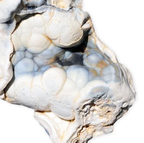 example of animals in phylum coelenterata
