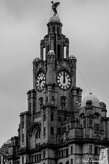Liver Building (crezzy1976) Tags: nikon d3300 crezzy1976 photographybyneilcresswell outdoors liverpool liverbuilding blackandwhite monochrome building architecture sky