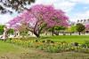 Paris, 2017 (YetAnotherLisa) Tags: paris spring france cherry tree blossom pink