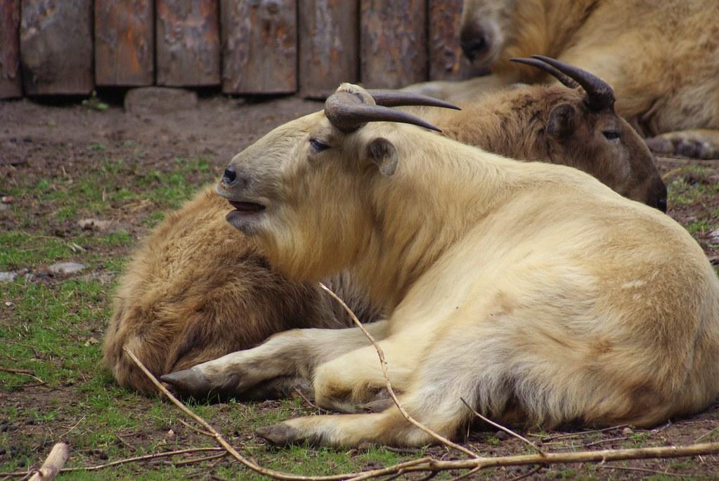 Ungulate Zoo The World's...